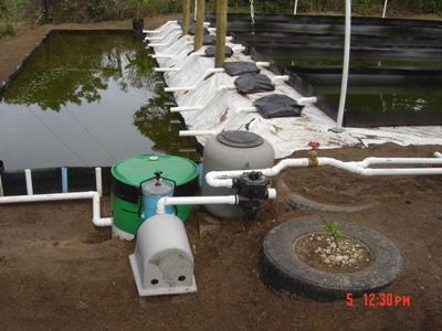 pump-duckweed