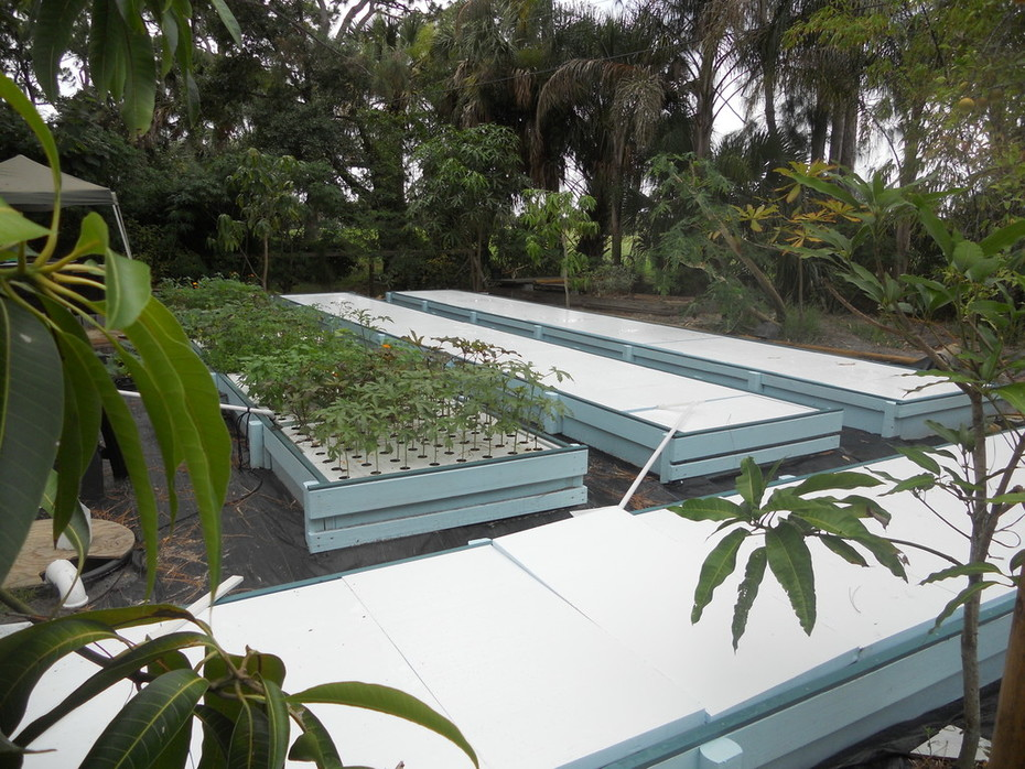 Aquaponics in Melbourne