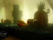 Spongebob Aquaponics!