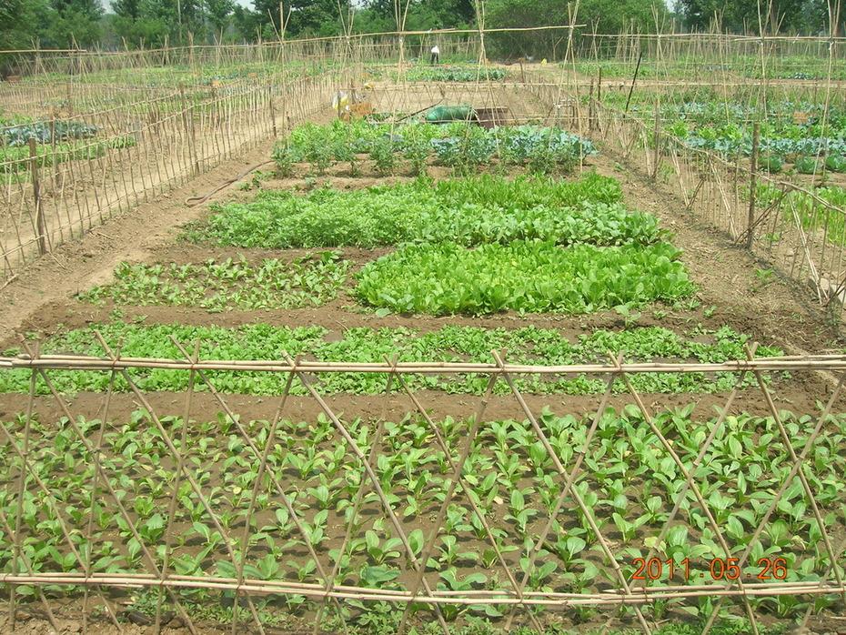 Little Donkey Farm- CSA production - Certified Organic