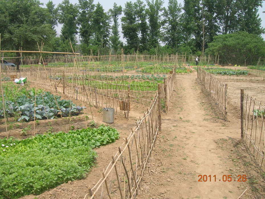 Little Donkey Farm- CSA production - Certified Organic