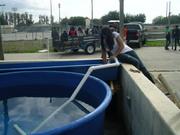 650 gallon tank