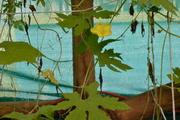aquaponics 25 july 2011 006