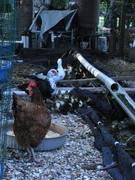 Duckaponics Resort Residents