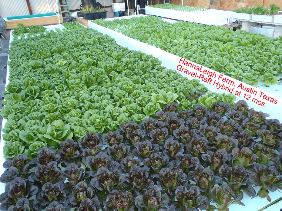 Commercial Hybrid DWC Rafts