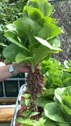 No weeding, no watering, no fertilizing.....