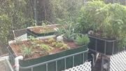 Fall Garden 2012