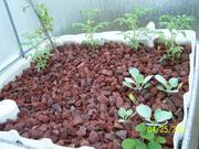 growbed #1