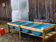 New Grow Bed and Sump