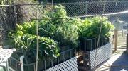winter garden 2013