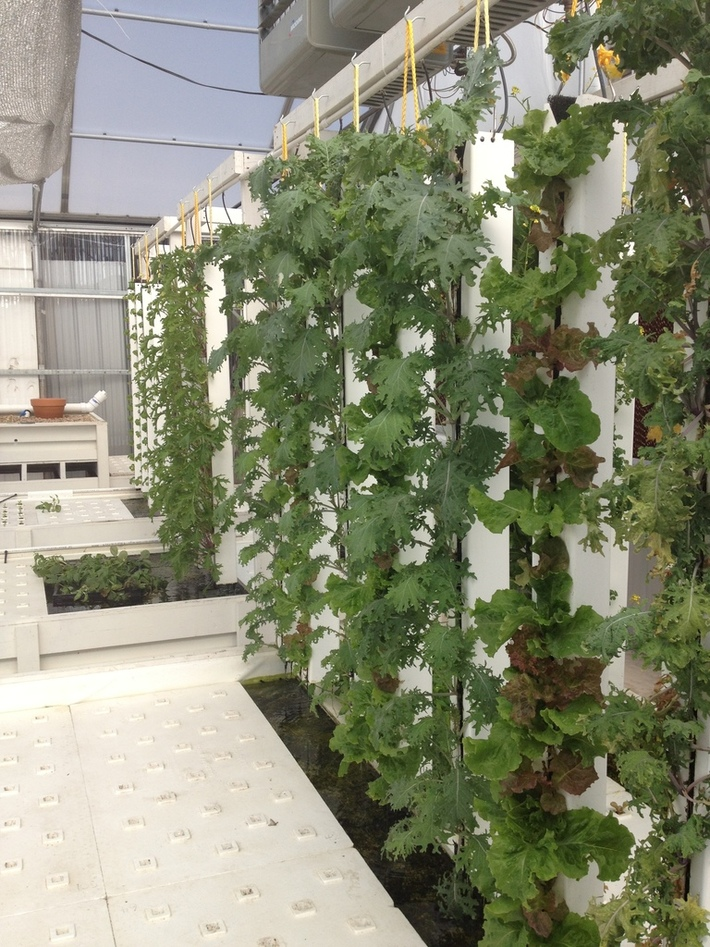 zip grow towers