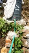 Aquaponics for Kenya