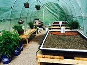 Greenhouse 49