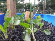 3 week plant growth