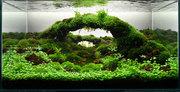 Aquascapes 007_baltic-aquascape2