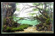 Aquascapes 005_aga_contest-winner-4