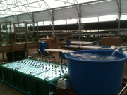 the Aquapoonic STEM Classroom at the Brooks Community School in Phoenix Az Nears Completion