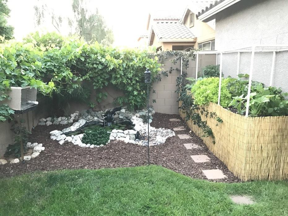 Update - Backyard Paradise!!!