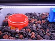 New Mini System added fish 2