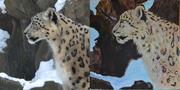 Snow Leopard Composite