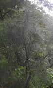 perihelion tree