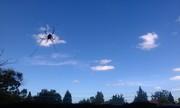 zeus spider