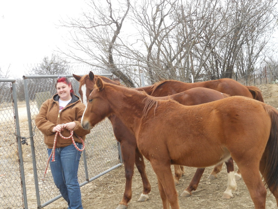 Kandis and the Horses