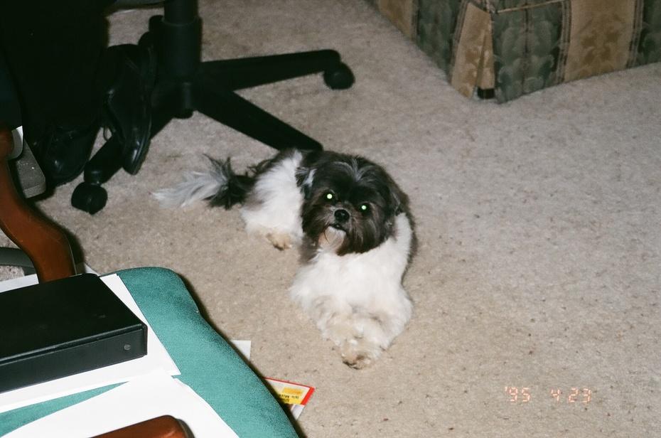 Dr. Bob and Barbara's dog - Ladybug