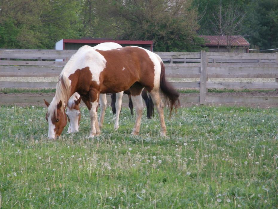 Cowboy Church horses