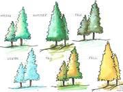 "Landscape Study ""Seasonal"""
