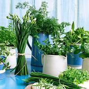 Herb Lovers!