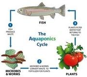 SoCal aquaponics