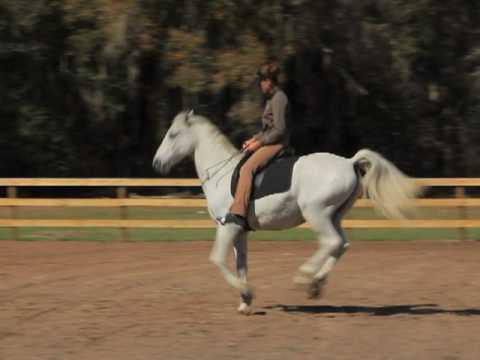 Bridleless dressage by Monty and Karen Rohlf