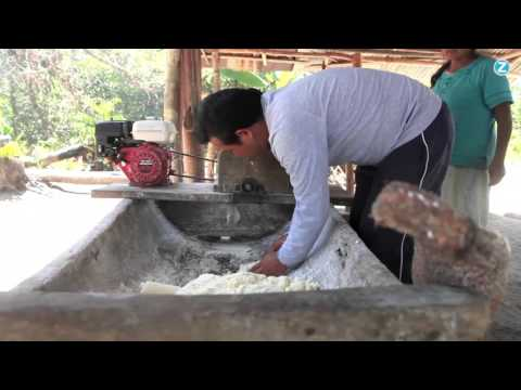 Indigenous Cooking: How to make Casabe bread