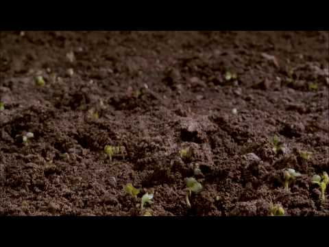 Dirt! The Movie - Trailer