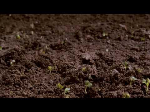 Dirt! The Movie - Trailer