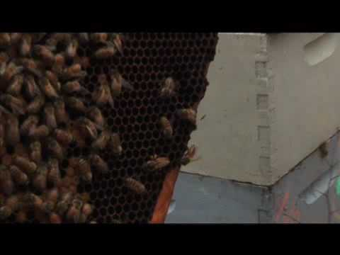 The Vanishing Of The Bees movie trailer