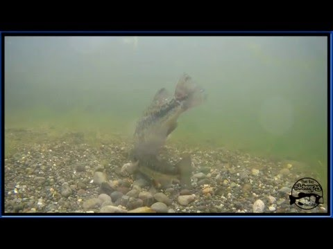 Spawning Bass.  Awesome  Underwater Footage
