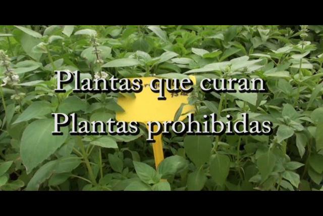 ...Plantas que curan, plantas prohibidas (con Josep Pàmies)...