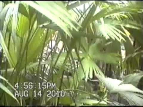 Artesano de la Palma