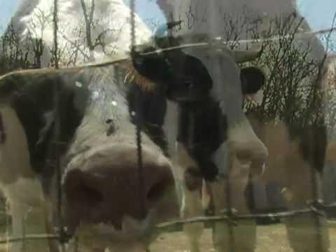 Glass Walls - Wände aus Glas / Sir Paul McCartney für PETA
