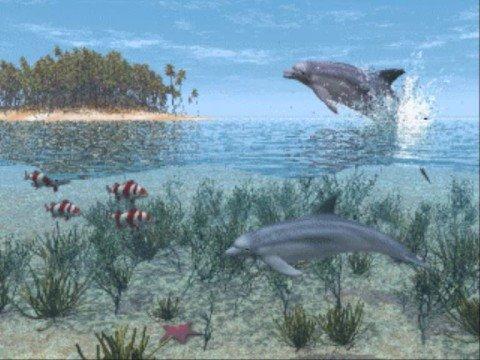 Dolphin Light Codes