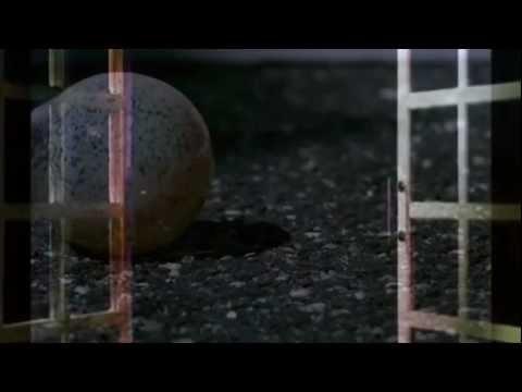 TIΠΟΤΑ ΟΡΘΙΟ ( ΒΑΘΙΑ ΝΕΡΑ ) - Mingrelia by kelly