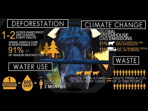 Cowspiracy: Documental Completo Subtitulado