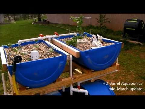 HD Barrel Aquaponics - mid-March update, rain lowered my ph - organic