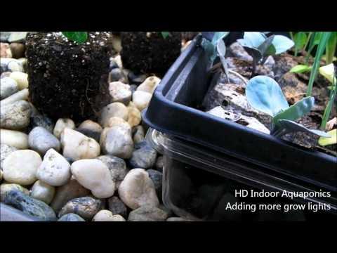 HD Indoor Aquaponics - Adding more grow lights