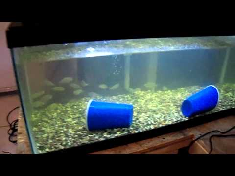fishies_1_4_12.mp4