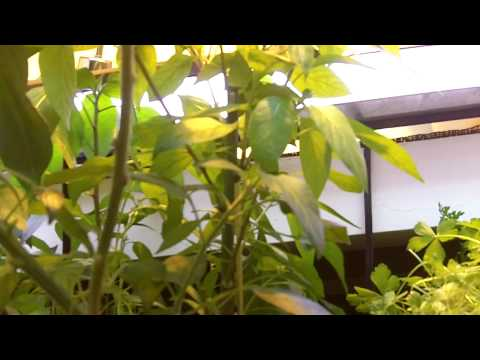 Aquaponics update May 23