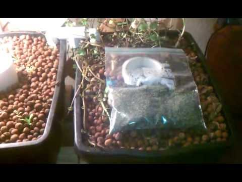 Three Aquaponics System update 5
