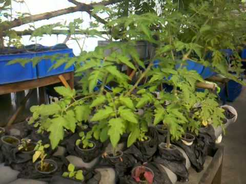 Urban Food Garden Update Dec 27 2013